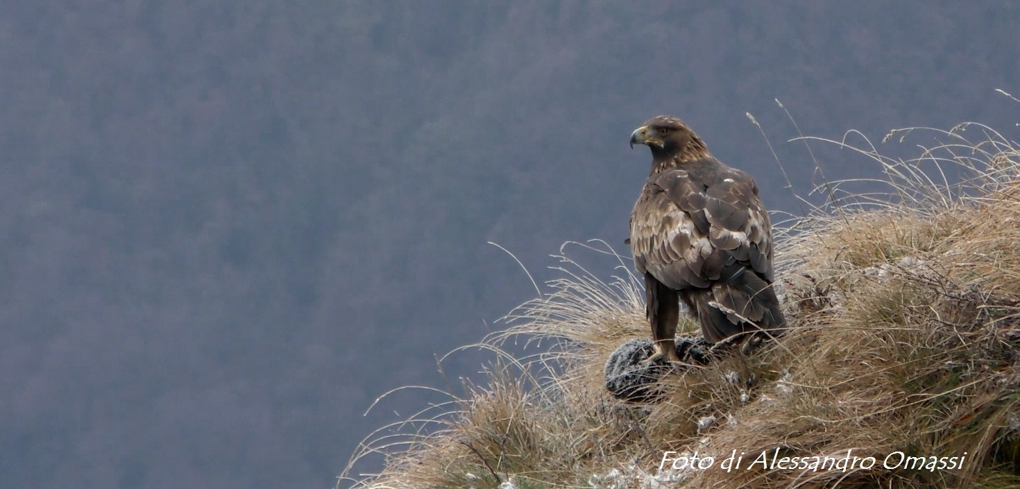 With eyes of an eagle_Slow Lake Como
